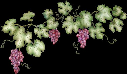 GrapevineClipart